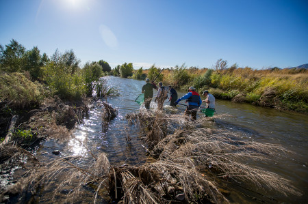 File: 2016 Santa Cruz River Fish Survey