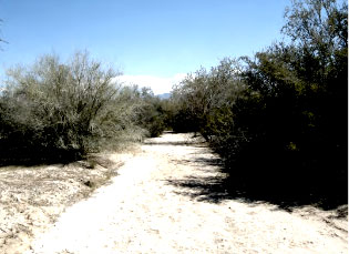 Tortolita Mountain Park, Cortaro and Hartman Property