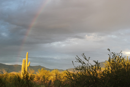 Rainbow over Desert