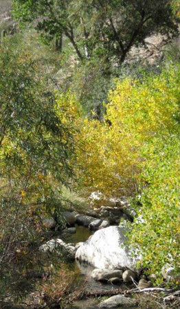 Sabino Canyon Creek