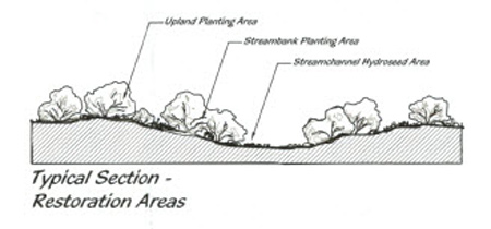 Typical Section - Restoration Areas