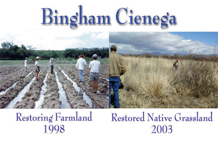Before and after photos of restoration at Bingham Cienega