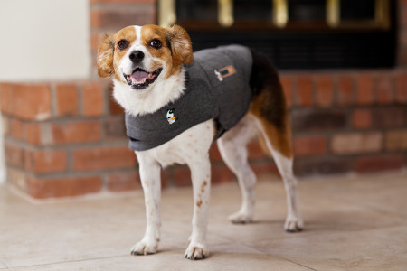 dog wearing ThunderShirt